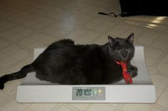 July 24 | Tiny The Cat's Amazing Weight Loss Journey