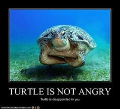 Mr. Turtle is not angry.