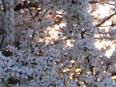 Fleurs à foison