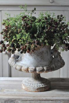 Blackberries in an old stone urn
