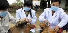 #موسوعة_اليمن_الإخبارية l اليوم الفلبين تسجل ثاني حالة إصابة لإنفلونزا الطيور