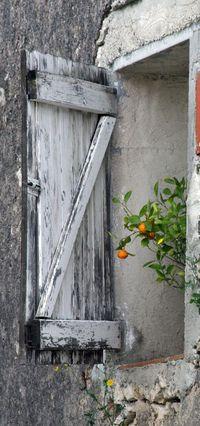 Orange tree in Provence, France Old Windows, Windows And Doors, Garden Windows, Cottage Windows, Window View, Open Window, Through The Window, Old Doors, Window Boxes