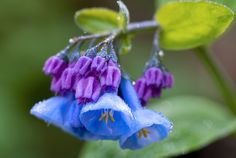 awesome Blue bells Beautiful Hd Wallpapers 2015