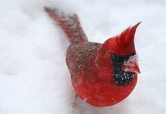 Audubon View | Audubon Magazine  Beautiful!
