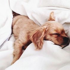 pinterest : miaprimeau #dog #cute #animals #photography #sleeping #sleep #puppy #bed