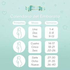 20 Semanas Cuantos Meses De Embarazo Serian Club De Bebés Junio 2018 20 Semanas De Embarazo Embarazo Semana 20 9 Semanas De Embarazo