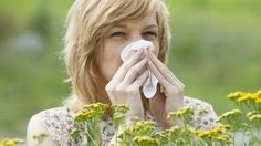 Tres años de inmunoterapia son suficientes para 'curar' la fiebre del heno a largo plazo. Los beneficios de las píldoras e inyecciones con extractos de polen se mantienen al cabo de muchos años solo en el caso de que el tratamiento se administre durante tres años