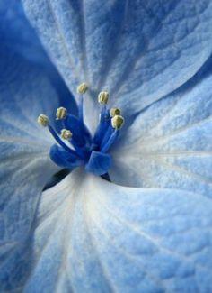 blue flore