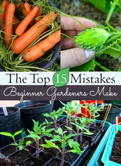 The Top 15 Mistakes Beginning Gardeners Make There are some great tips here that will save time and money for new gardeners. Also some good tips for seasoned gardeners........ http://herbsandoilshub.com/the-top-15-mistakes-beginning-gardeners-make/