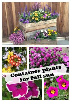 Container Plants for Full Sun: Choices for Colour, Foliage a.-Container Plants for Full Sun: Choices for Colour, Foliage and Texture Container Plants for Full Sun: Choices for Colour, Foliage and Texture - Full Sun Container Plants, Full Sun Plants, Container Flowers, Container Gardening, Full Sun Garden, Sun Loving Plants, Full Sun Perennials, Shade Perennials, Flower Gardening