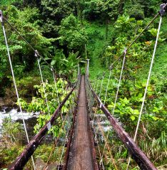 The suspension bridge on the Lavena Coastal Walk in Taveuni, Fiji.