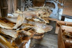 Lofoten Stockfish Museum #HattvikaLodge