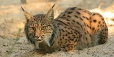 Visitar Doñana: Espacio Natural Protegido | Doñana Reservas