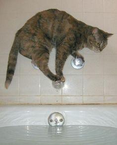 Bath Avoidance Level: Expert