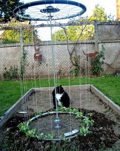 Trellis~ To make such a device is an easy task you will be done with it in only one afternoon. Use the bar to connect the pair of bike rims together. With one end stuck in the ground, begin tying wire &/or garden twin from one rim to the other. Make sure they are tight, because the structure shouldn't come apart at the first blow of the wind. And finally, place the plants at the base of each wire. They will grow nicely upward & you will feel so proud seeing you recycled & cared for your…