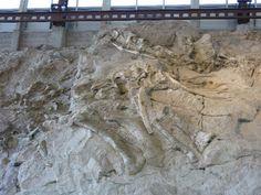 La Pared De Los Dinosaurios En Utha, EEUU