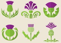 The thistle flowers are a popular symbol in different countries and cultures, maybe you need fresh ideas for your logo or to illustrate publications and projects about botany and flowers.