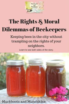 The Rights and Ethics of Urban Beekeepers - Muckboots and Munchkins