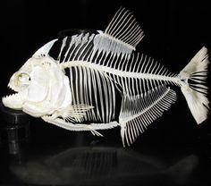 piranha skeleton - Google Search