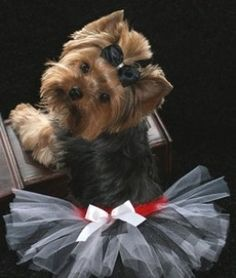 Designer Dog Clothes- oh my word!!!!!!! how cute is this?!