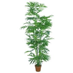 TCB-13 170CM Artificial Dypsis lutescens Small Palm Trees, Small Palms, Plants, Plant, Planets