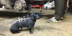 PEDRO HITOMI OSERA: O dachshund que é um mecânico!!!!!