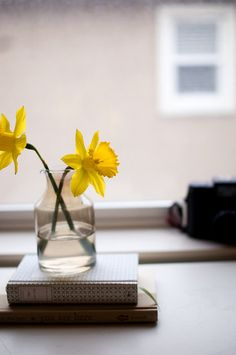 Small daffodils in glass vase on books