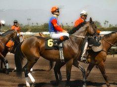 Secret Horse Racing Betting Strategies ? The Overhyped Horse - http://horseracinghorse.com/horse-betting/secret-horse-racing-betting-strategies-the-overhyped-horse/