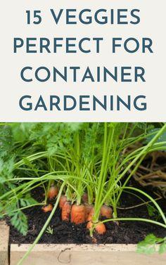 Vegetable Planters, Home Vegetable Garden, Container Gardening Vegetables, Pot Plants, Veggie Gardens, Fruit Garden, Growing Carrots, Growing Herbs, Growing Vegetables