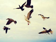 Sea Gulls Monterey
