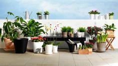 Λατρεύουμε τα φυτά –σιγά σιγά θα μετατρέψουμε τη βεράντα μας σε πραγματική όαση!