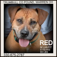 FOUND DOGS...SEE LIST>>> (click on picture to see all dogs at shelter)...TRUMBULL COUNTY DOG KENNEL WARREN, OHIO.... http://www.petfinder.com/pet-search?shelterid=OH650 ALSO ADOPTABLE! PLEASE REPIN!!!