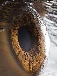 The fantastic macro photos of the human eye by Suren Manvelyan.Incredible close-up photos of Your beautiful eyes Eye Close Up, Extreme Close Up, Fotografia Macro, Human Eye, Human Body, Eye Photography, Amazing Photography, Digital Photography, Sweets Photography