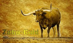 Zgold for Zebu Gold maybe? Test some names are you keen?