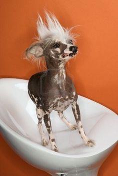este perro