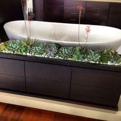 Succulent planter in a bathroom.  GREAT idea! Thank you Paul Fenner!!!!