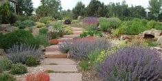 Image result for xeriscape landscaping eastern washington