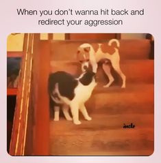 Hooman told me not to hit the darn cat🤣 - Witzig - Hunde bilder Animal Jokes, Funny Animal Memes, Funny Animal Videos, Cute Funny Animals, Funny Animal Pictures, Cute Baby Animals, Videos Funny, Funny Cute, Funny Dogs