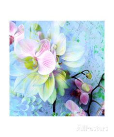 Water Orchid II Photographic Print by Alaya Gadeh at AllPosters.com