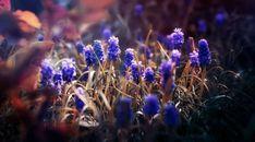Flowers Macro Blurring