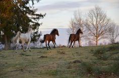 Pferde in Freiheit...