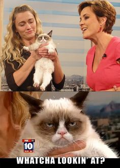 Ho... Grumpy cat, I love her (it's a girl!)  Grumpy cat on FOX: http://video.foxnews.com/v/1889043731001/grumpy-cat-becomes-internet-sensation/