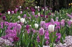 Ogród Anety - strona 98 - Forum ogrodnicze - Ogrodowisko