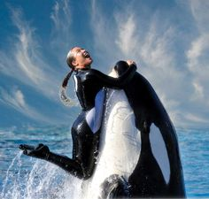 """Other pinner said: """"Killer Whale and trainer...they need to do this again"""" Umm no they don't! This is how people get killed! Watch """"Blackfish""""!"""
