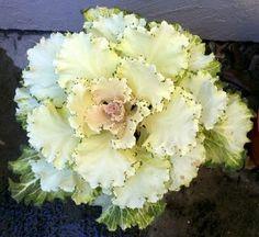 flowering cabbage Cabbage Flowers, Clovers, Violets, Yard Ideas, Floral Wreath, Herbs, Gardening, Wreaths, Vegetables
