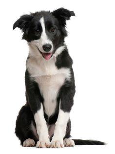 Veterinary Supplements