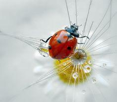 lady bug by tugba kiper, via 500px