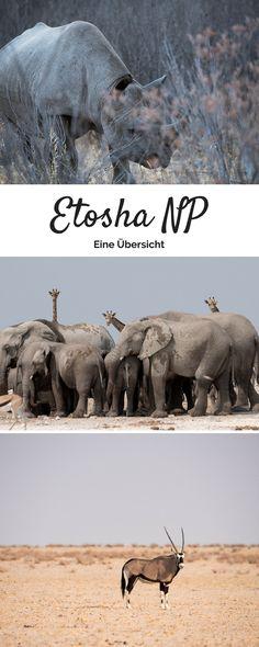 Informationssammlung zum Etosha Nationalpark Namibia