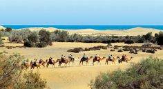 Spain, Canarias, Gran Canaria, camel ride across the Maspalomas sand dunes Tenerife, Grand Canaria, Reserva Natural, Miles To Go, Spain And Portugal, Canario, Canary Islands, Holiday Destinations, Holiday Travel
