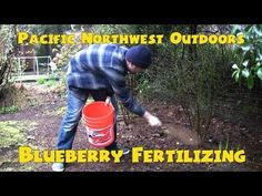 Bluberry fertilizing - Pacific Northwest Outdoors - Bing video